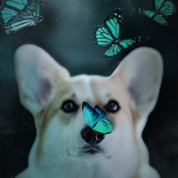 butterflies dog puppy cute turquoise teal blue nighttime night adorable freetoedit