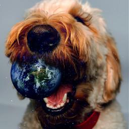 picsart madewithpicsart surreal dog earth stars ball freetoedit