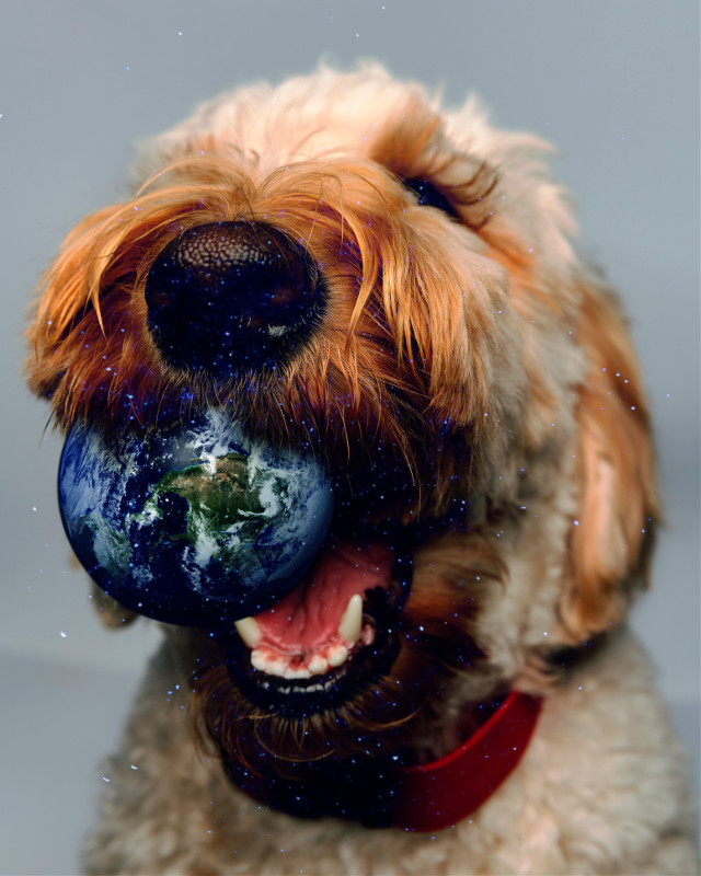 Be creative with PicsArt   #picsart #madewithpicsart #surreal #dog #earth #stars #ball