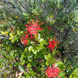 flowers notos red nature