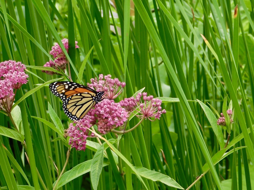 this is a photo that i took over the summer on my mother's camera! i love it so much.  #outdoors #photography #butterfly #flowers #nature #animal