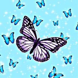 butterfly aesthetic love freetoedit
