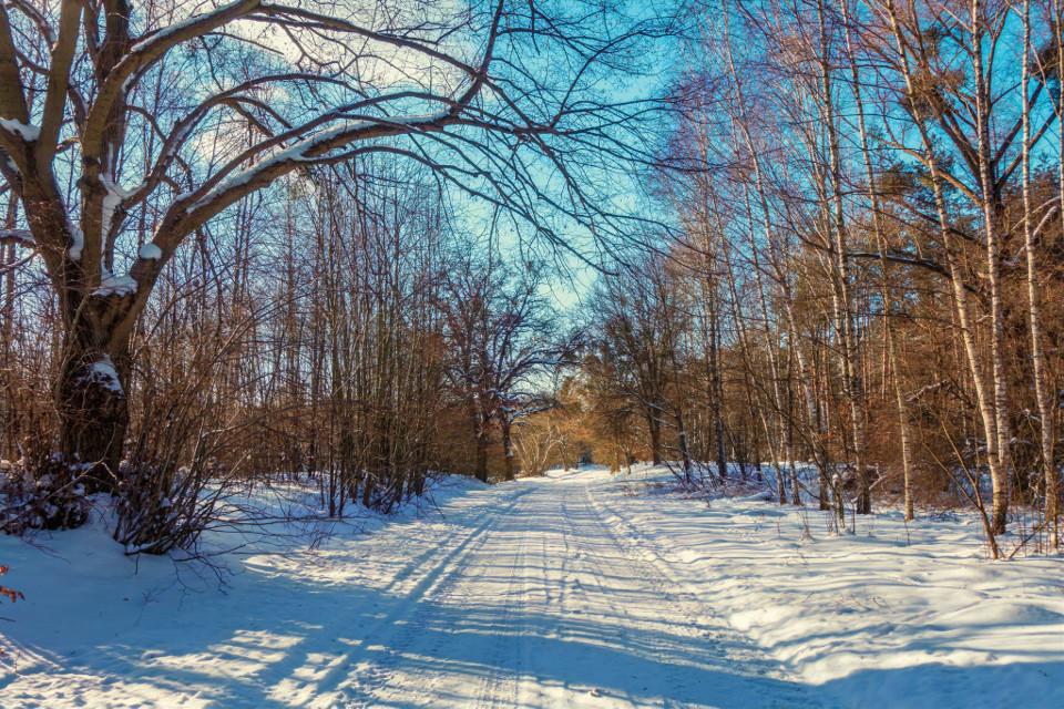 #winter #landscape #road #nature