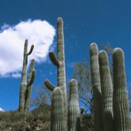 cloud cactus desert nature