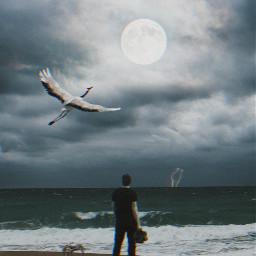 freetoedit beach man moon bird