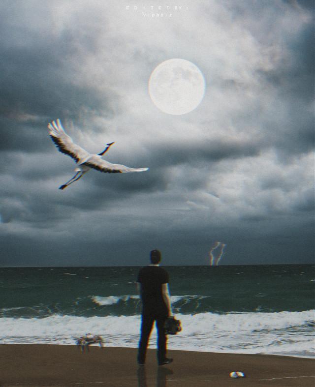 - - - - - - - - - - - - - - - -   #beach #man #moon #bird #Seagull #Swan #Sea #Lightning #crab #boy #sky #clouds #cloudyday #waves #