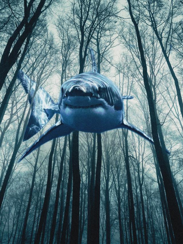 Be creative with PicsArt      #picsart #madewithpicsart #surreal #shark #tree #water #forest #blue #dark