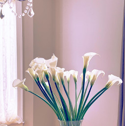 lilies callalily flowers bouquet