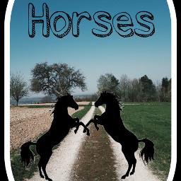 horses black background freetoedit