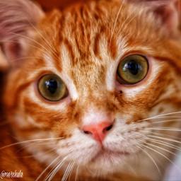 catslover gatoselfie catpower