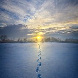 freetoedit remixit nature peace footprintsonthesand footprints winter snow landscapephotography beauty pretty landscape beautiful follow fanart