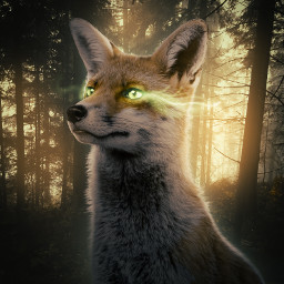 365world fox transformed wild wilderness forest fantasy fantastical magic darkness glow supernatural animal beast dontremixoredit