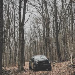 freetoedit woods