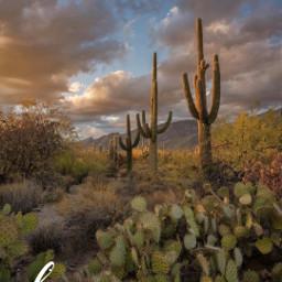 naturelover cactus cloudscape