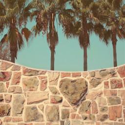 plamtrees hearrts❤ haveagoodday hearrts