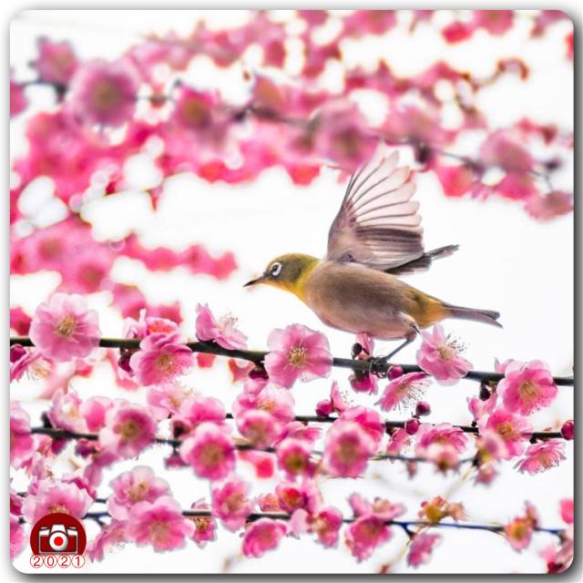 #ig_cameras_united #icu_japan #mejiro #icu_mejiro