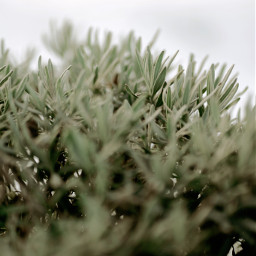 photography naturephotography green nature wallpaper cute art winter freetoedit