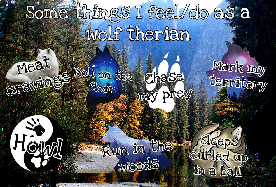 Some things I feel and do as a wolf therian! 🐺 Inspired by @lxvlyy    Welcome to the wolf pack!  ☾ ☾ ☾ ☾ ☾ ☾ ☾ ☾ ☾ ☾ ☾ ☾ ☾ ☾ ☾ ☾ ☾ ☾ ☾  🐺🐺🐺🐺🐺🐺🐺🐺🐺🐺🐺🐺🐺🐺🐺                                         🌑🌒🌓🌔🌕🌖🌗🌘🌑  My name: Wolfy  About me: I'm a wolf therian, and I love wolves  Theriotype: Grey Wolf 🐺 Pronouns: She/her Favorite colors: Blue and light grey Favorite animal: The Wolf ❤️   Wolf of the day: @therian4life   Meet the wolf pack: 🐺 @slothlover1123 🦥 🐺 @lxvlyy 🦖 🐺 @derpy_pan_child 🐺 @midnightwolfavantisf 🐺 🐺 @goldenluvv  🐺 @_paradigm_ 🍓 🐺 @0nuggetforever0 🐺 @p_i_c_s__a_r_t_  🐺 @mxshroom-  🐺 @phibs11  🐺 @fussy_frances 🐺 @endo_the_raptor 🐺 @alxxsxul 🐺 @foxoryx_official 🐺 @disnxy77  🐺 @deer_2021 🦌 🐺 @emilyandmaya2021 🐺 @xfluffywolfiex 🐺 🐺 @sam_alpaca 🦙   🐺 @sweetpotatounicorn5 🥔 🐺 @gecko-lover123 🐺 @therian4life 🐺 @kendycatz-yellow 🌝 🐺 @piggythebrave 🐺 @the_lost_herondale 🐺 @fionanicole12  Please love and help the wolves!  ❤️🐺❤️  Hashtags: #wolf #wolftherian #proudtherian #therian #therianthropy