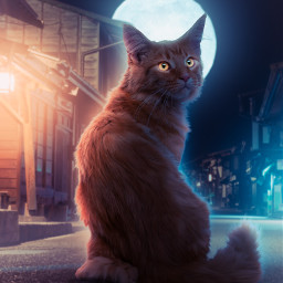 365world cat mainecooncat moon moonlight night dark darkness glow dualcolors street lit dontremixoredit