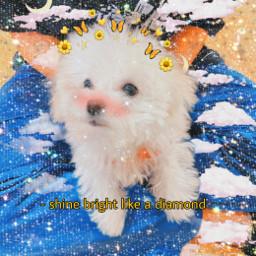icon nct kpop kpopicon daelga puppy freetoedit