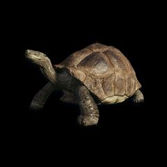 turtle freetoedit