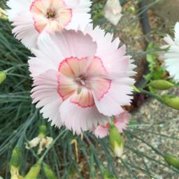 pcflowersaroundme flowersaroundme freetoedit
