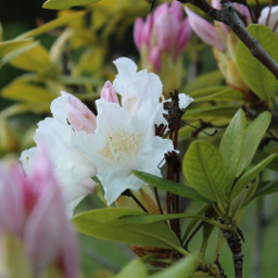 flower freetoedit pcflowersaroundme flowersaroundme
