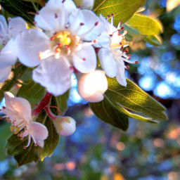 sunrisephotography flowersaround sunlighteffect freetoedit