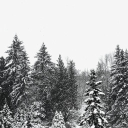 winter snowwhite wintertime winterwonderland naturephotography trees treephotography landscape treeline snowyforest snowscape outdoors nature peaceful freshair forest treebackground naturebackground winterbackground freetoedit