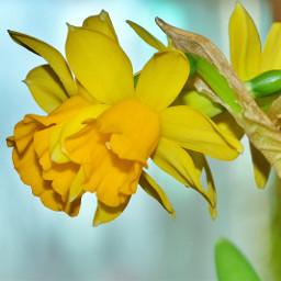 myphoto nature naturelovers flower flores freetoedit pcflowersaroundme flowersaroundme