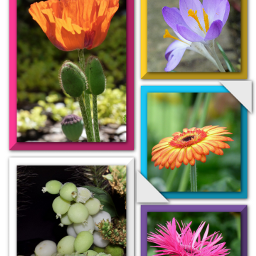 photography myphotos nature flowers collage freetoedit
