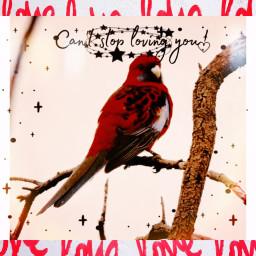 rip redbird rcdelicatedoodles delicatedoodles freetoedit