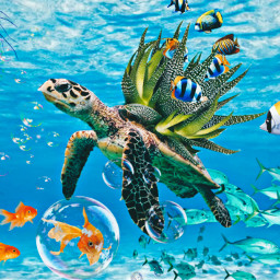 undertheocean ocean oceanlife oceangirl challenge freetoedit ircdesignthevase designthevase