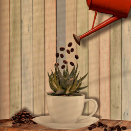 coffee cupofcoffe cupofflowers coffeebeans plant freetoedit ircdesignthevase designthevase