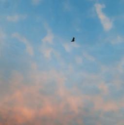 freetoedit sky bird sunset clouds