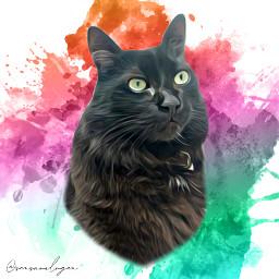 gato pet freetoedit