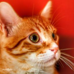 catslover gatos cat