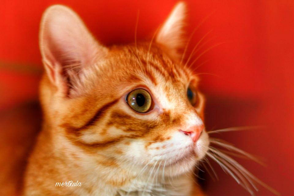 #catslover #gatos #cat