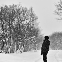 winter snow bw bnw blackandwhite bwphotography bnwphotography photography winterforest snowy snowyday snowyforest freetoedit