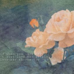roses freetoedit