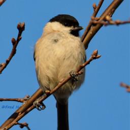 myphoto nature naturelovers birds wildlife mosel moselle freetoedit