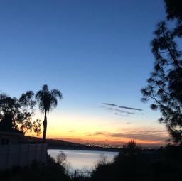freetoedit ig_cameras_united icu_japan california water palmtrees