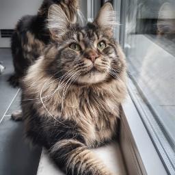 cat catlove pet animal freetoedit
