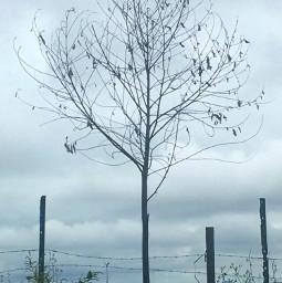 foggyday country mountain nature tree freetoedit