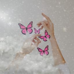 butterflys ircbeautyofhands beautyofhands freetoedit