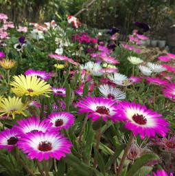 freetoedit noedit flowers pink yellow