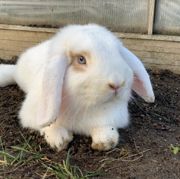 freetoedit bunny cute white abospecial