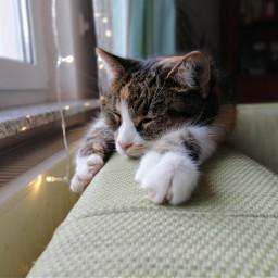 shady cat cute animal photo