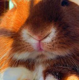 bunnylove bunny bunnyears