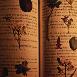 photography photo photooftheday book vintage flowers nature freetoedit